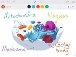 Las apps recomendadas de... Alberto Molina - Educación 3.0   Herramientas WEB 4.0   Scoop.it