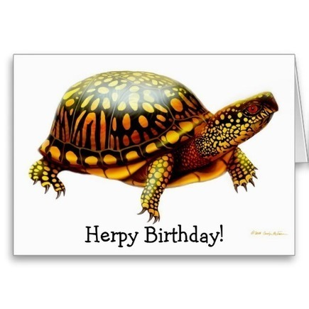 Herps Herpy Birthday Turtle Card from Zazzle.com   Artistic Greeting Cards   Scoop.it