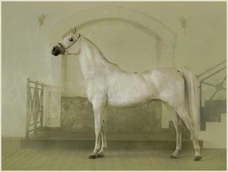 "::: PHOTOGRAPHY :: ""Horses"" by Polish photographer and publisher Wojtek Kwiatkowski | The Art of the Horse | Scoop.it"