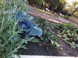 Azoteas verdes: santuarios de biodiversidad en la ciudad | Jardines Verticales y azoteas verdes. | Scoop.it