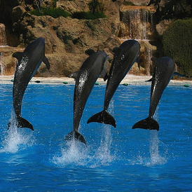 India Just Banned Dolphin Shows, and the U.S. Should Too | All about water, the oceans, environmental issues | Scoop.it