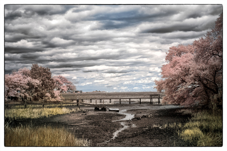 Fuji X Pro 1  -  720nm Infrared Faux Color and B&W Post Processing | Mark Hilliard | Fuji X-Pro1 | Scoop.it
