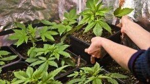 Le cannabis légal en République tchèque à des fins thérapeutiques | Union Européenne, une construction dans la tourmente | Scoop.it