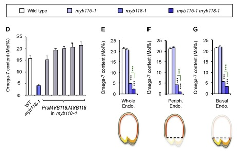 Transcriptional Activation of Two Palmitoyl-ACP Δ9 Desaturase Genes by MYB115 and MYB118 is Critical for Biosynthesis of Omega-7 Monounsaturated Fatty Acid in the Endosperm of Arabidopsis Seeds | SEED DEV LAB Biblio | Scoop.it