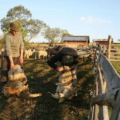 Transhumance shepherds at work | Journalism - Photography - Stories | Scoop.it