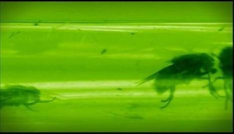 Entomologiste sur les scènes de crime   EntomoScience   Scoop.it