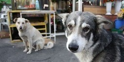 Stop the Mass Killing of Dogs in Romania   cats & dogs!   Scoop.it