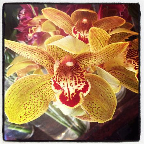 Order Flowers Through Online Deliver | Get Online Flowers | Scoop.it