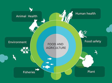 What is the role of food and agriculture in tackling antimicrobial resistance?… | Agriculture, Climate & Food security | Scoop.it