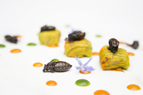 A guide to eating insects in Mexico City - Out of the Blue | Entomophagy: Edible Insects and the Future of Food | Scoop.it