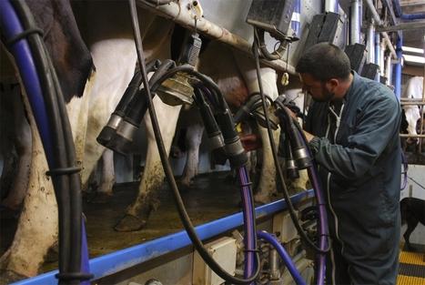 Belgique : Le prix du lait payé à l'agriculteur a augmenté de 26% entre 2012 et 2013 | Dairy farming and industry | Scoop.it