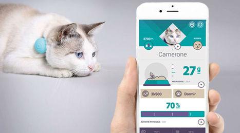 Canhegat Canhe-Fit: un pendentif pour la santé de vos animaux | Santé et Soins | Scoop.it