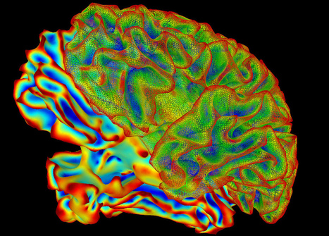 SumaLateral Whole Brain Image | Social Neuroscience Advances | Scoop.it