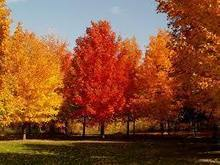 Fall Brings Beautiful Spectrum of Tree and Leaf Colors | Tree Service | Scoop.it