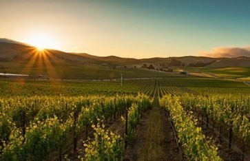 New Zinfandel film debuts in Napa | Vitabella Wine Daily Gossip | Scoop.it