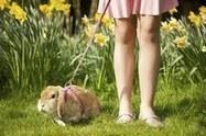 La UE prohibe la experimentación en animales con fines cosméticos | Erika Guerrero | Scoop.it