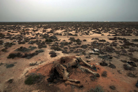 #Tunesia 'We Are Thirsty' Say Tunisians as #Drought Creates Tensions | Messenger for mother Earth | Scoop.it