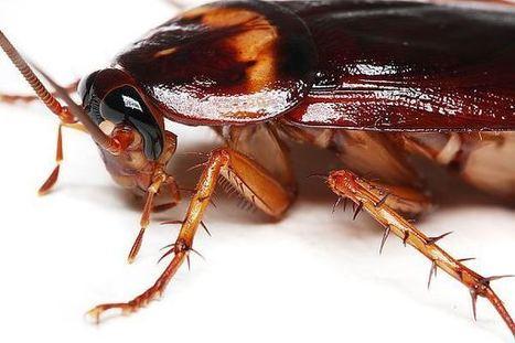 Five Truths About Cockroaches | Dizon Studios - Photography | Scoop.it