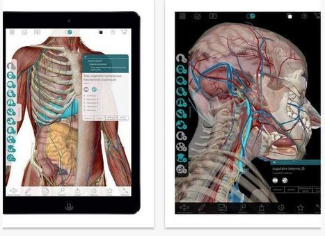 3 outils en ligne pour découvrir le corps humain | Innovation pour l'éducation : pratique et théorie | Scoop.it
