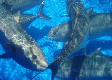 World Fishing & Aquaculture - EC works to 'diversify' aquaculture | Fisheries3point0 | Scoop.it