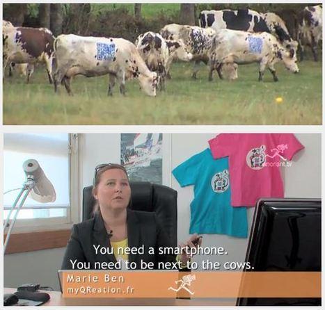 WTF QRCODE & QR cows | QRdressCode | Scoop.it