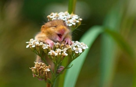 Happiest Field Mouse In The World   Abgefahrene Tiere   Scoop.it