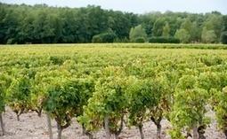 Bordeaux: Les prix du patrimoine viticole dévoilés | Le Vin et + encore | Scoop.it