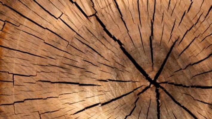 Le salon Bois Energie s'invite à Limoges - France 3 Limousin | Bois, forêt, construction, bois énergie, ameublement et plus | Scoop.it