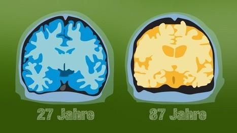 Das Gehirn in seinen reifen Jahren | Weiterbildung | Scoop.it