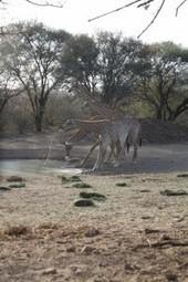Poľovačka v Juhoafrickej republika je pre domácich povolanie | Favorite blog posts | Scoop.it