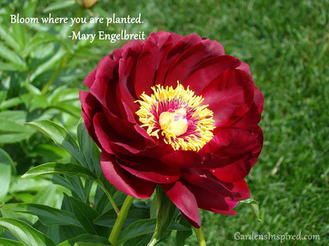 Quote by Mary Engelbreit | The Muse | Scoop.it