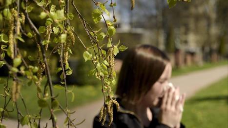 Ilmastonmuutos ei lupaa hyvää allergikoille – siitepölystä voi tulla entistä isompi riesa | Terveystieto | Scoop.it