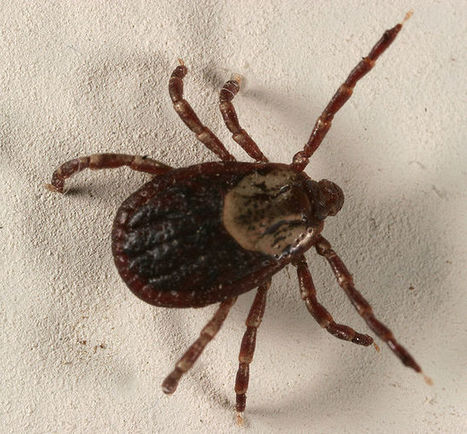 New Lyme Disease Vaccine Promising  In Clinical Trial | Biosciencia News | Scoop.it