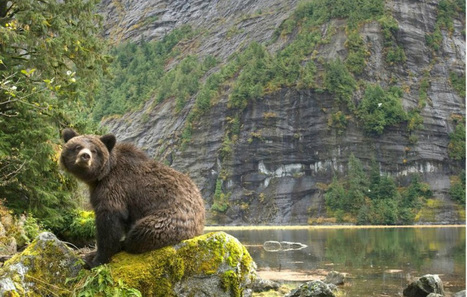 See the Great Bear Rainforest Like You've Never Seen It Before (VIDEO) - One Green Planet | WWWBiology | Scoop.it