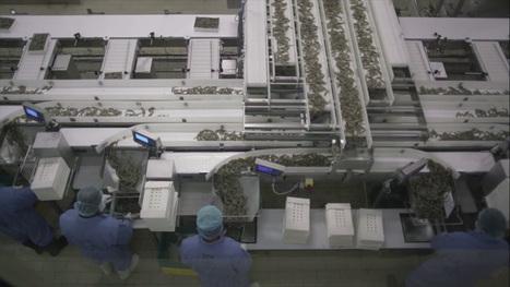 Shrimp Processing - NAQUA Processing Plant | National Aquaculture Group (NAQUA) | Scoop.it