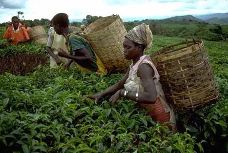 Tombouctou : la MINUSMA au secours des agriculteurs affectés par la crise | SécuriteAlimentaireSahel | Scoop.it