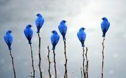 34 ideas sobre contenidos para tu comunidad en Twitter | mi proyecto en twitter | Scoop.it