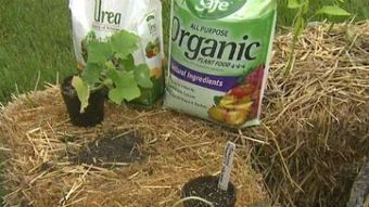 Gardening with straw, thinning and planting strawberries   FOX6Now ...   Gardening   Scoop.it