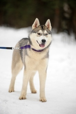 Burgess Pet Care » Blog Archive » Winter Care For Your Dog | Dogs | Scoop.it