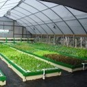 The GrowHaus uses Aquaponics for Sustainable, Community Redevelopment - Green Building Elements | Growing Food | Scoop.it