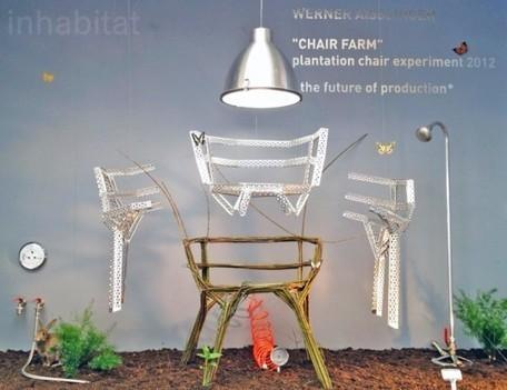 Chair Farm: Werner Aisslinger Creates Chairs from Living Trees! | Du mobilier, ou le cahier des tendances détonantes | Scoop.it
