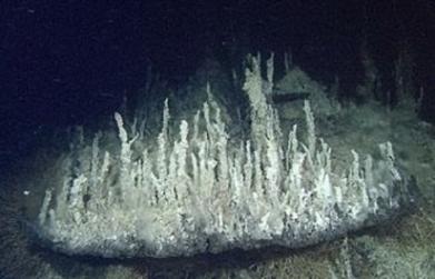 Une source hydrothermale inconnue découverte dans le Pacifique | Mes passions natures | Scoop.it