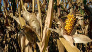 GMOs should be safety tested before they hit the market says American Medical Association | YOUR FOOD, YOUR HEALTH: Latest on BiotechFood, GMOs, Pesticides, Chemicals, CAFOs, Industrial Food | Scoop.it
