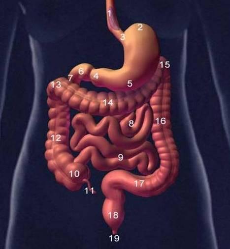 Fisiología y genética de la nutrición humana | Principios de la nutrición | Scoop.it