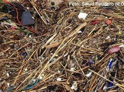 Muchas especies marinas se ven afectadas por los plásticos en el Mediterráneo | Bajoelagua - Todo sobre el buceo, submarinismo y el mar | Contaminación en Oceanos | Scoop.it