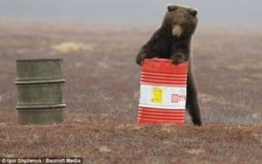 Russian Bears Are Hooked on Jet Fuel | The Fix | Drugs, Crime and Society | Scoop.it