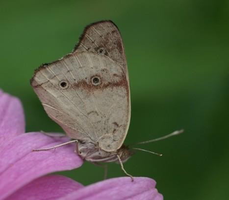 Global : Photo de papillon exotique - Serre à papillons - Volière à Papillons - Exotic butterflies - Butterfly - Page 2 | Fauna Free Pics - Public Domain - Photos gratuites d'animaux | Scoop.it