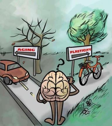 Physical Activity Leaves Brain More Open to Change | Coaching & Neuroscience | Scoop.it
