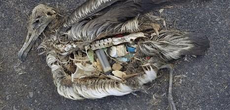 Comment la pollution des océans affecte les humains (+ infographie) | Toxique, soyons vigilant ! | Scoop.it