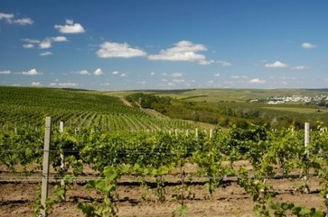 Russia's ban on Moldovan wine 'unfounded' | Autour du vin | Scoop.it
